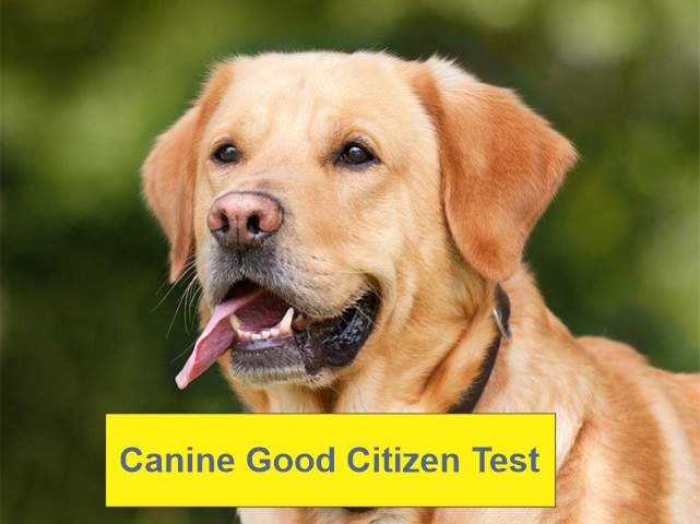 CanineGoodCitizen