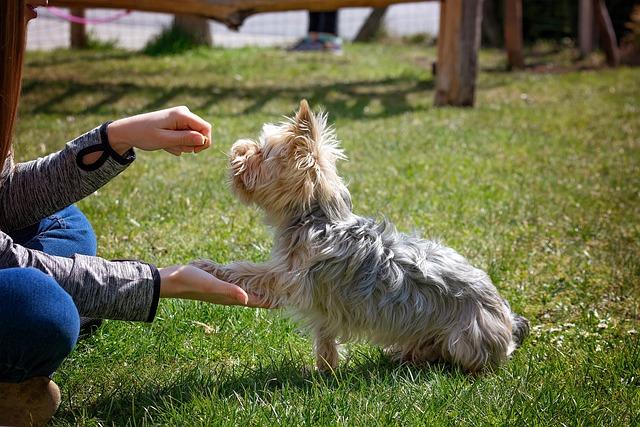 Dog Training 5098572 640