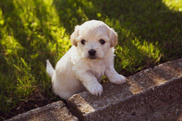 Puppy 4234435 640